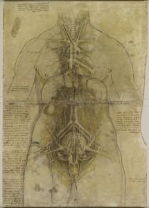 Anatomia Online